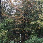 Det skønne efterår